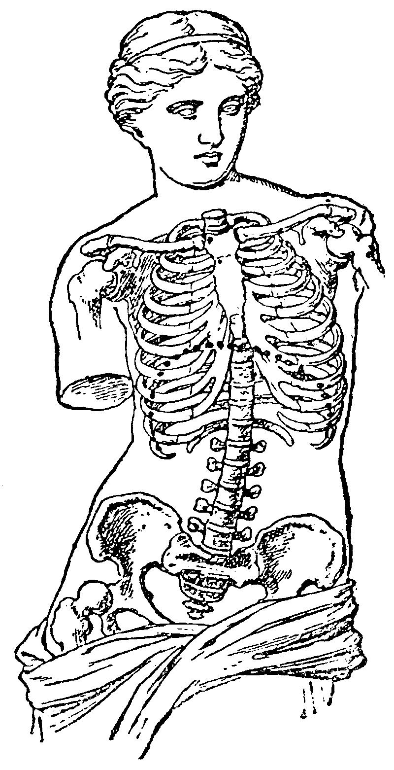venus van milo_skelet